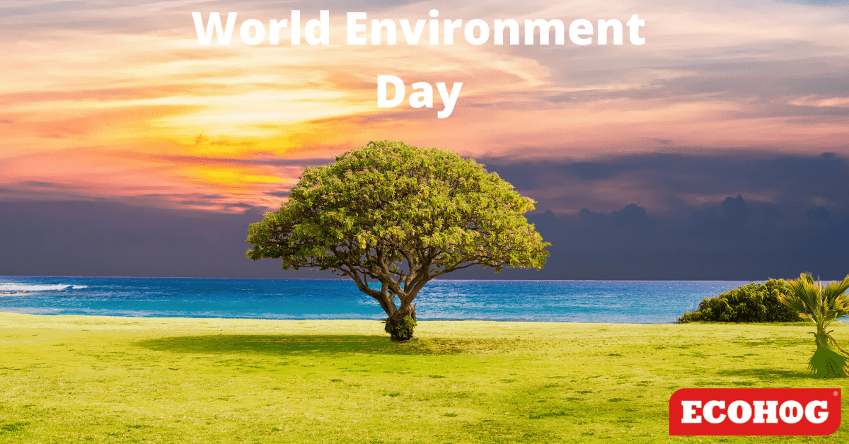 World Environment Day nature